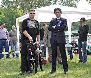 Zahur Custodi Nos - champion class - CAC. CACIB, CENTRAL EASTERN EUROPEAN CHAMPION. ROMANIAN CH