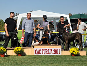 Sforza Samba – Young Class - Junior CAC, Junior BOB and 2nd place Junior BOG 2 FCI
